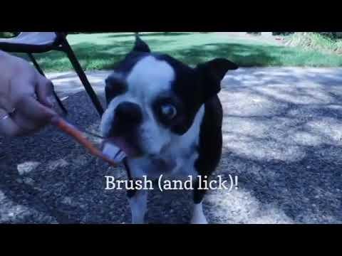 DIY dog toothpaste - YouTube
