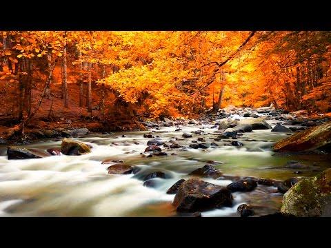 Música Relaxante e Sons da Natureza - Acalmar, Relaxar, Dormir