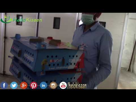Broiler Hatchery || Poultry || Incubator And Hatcher || Hello Kisaan