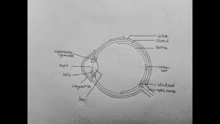 How to Draw a human eye for class10 LIFE SCIENCES||Miandad hoque||hoque