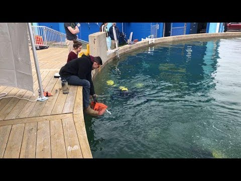 MATE ROV Competition Comes Home to Great Lakes Maritime Heritage Center