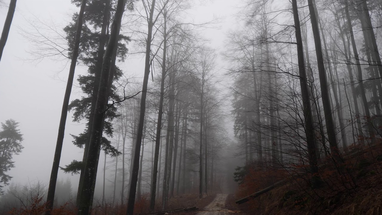 Relaxing Virtual Drive Through Foggy Forest 1 Hour Rain