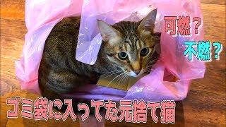 ゴミ袋に入って自ら捨てられようとする元捨て猫がいるらしい