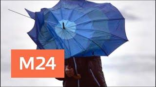Штормовое предупреждение объявили в Москве в ближайшие часы - Москва 24