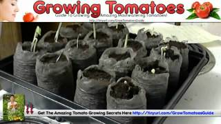 Tomato Planting - Miracle Grow For Tomatoes