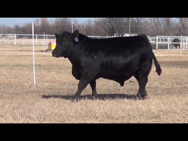 Express Ranches Lot 12