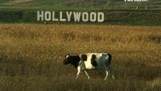 В Луцке появился свой Голливуд