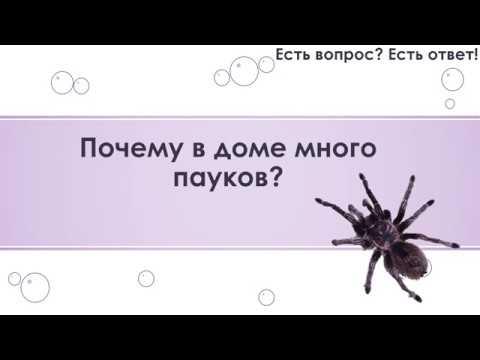 Почему в доме много пауков? [37]
