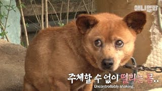 Dog was facing a hard time.. the reason why he was able to hold on thumbnail