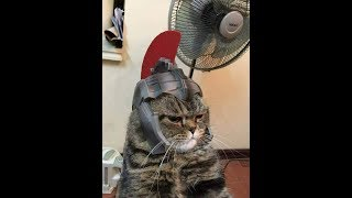TRY NOT TO LAUGH - Funny Pets & Animals Compilations #4 | Tik Tok Videos 2018
