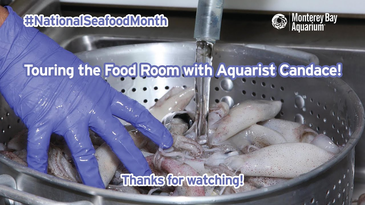 Touring the Food Room with Aquarist Candace! | Live From The Aquarium | #NationalSeafoodMonth