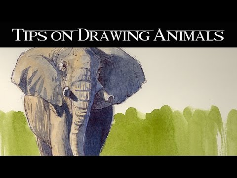 Drawing Animals From Life