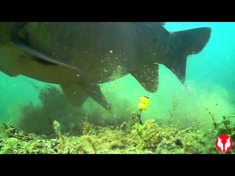 Présentation caméra sous marine Water Wolf