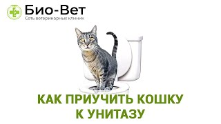 Как Приучить Кошку К Унитазу & Метод Приучения Кошки к Унитазу. Ветклиника Био-Вет