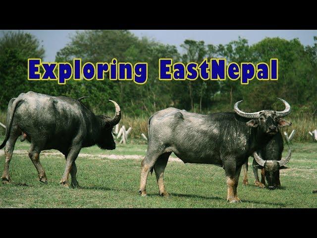 Exploring EastNepal - Koshi Tappu Wildlife Reserve, Barahachhetra, Ilam Maipokhari