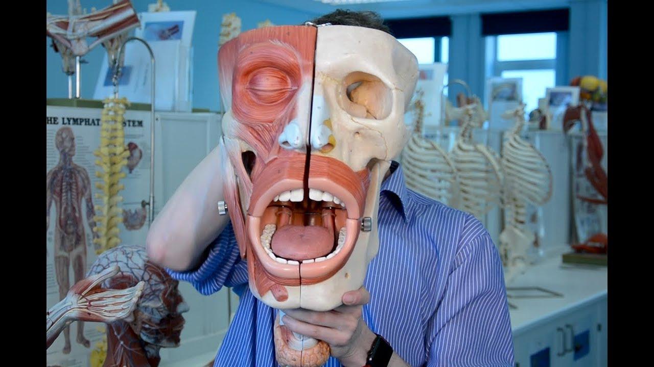 Sensory Nerves Of The Face Trigeminal Nerve Cn V Anatomy Youtube