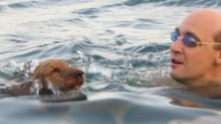 Фанни на море. Английский кокер спаниель 1 год 3 месяца