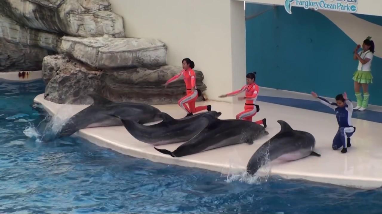 花蓮海洋公園海豚 - YouTube