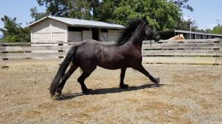Sorry, he is dirty but it just rained. He is $ 25000.