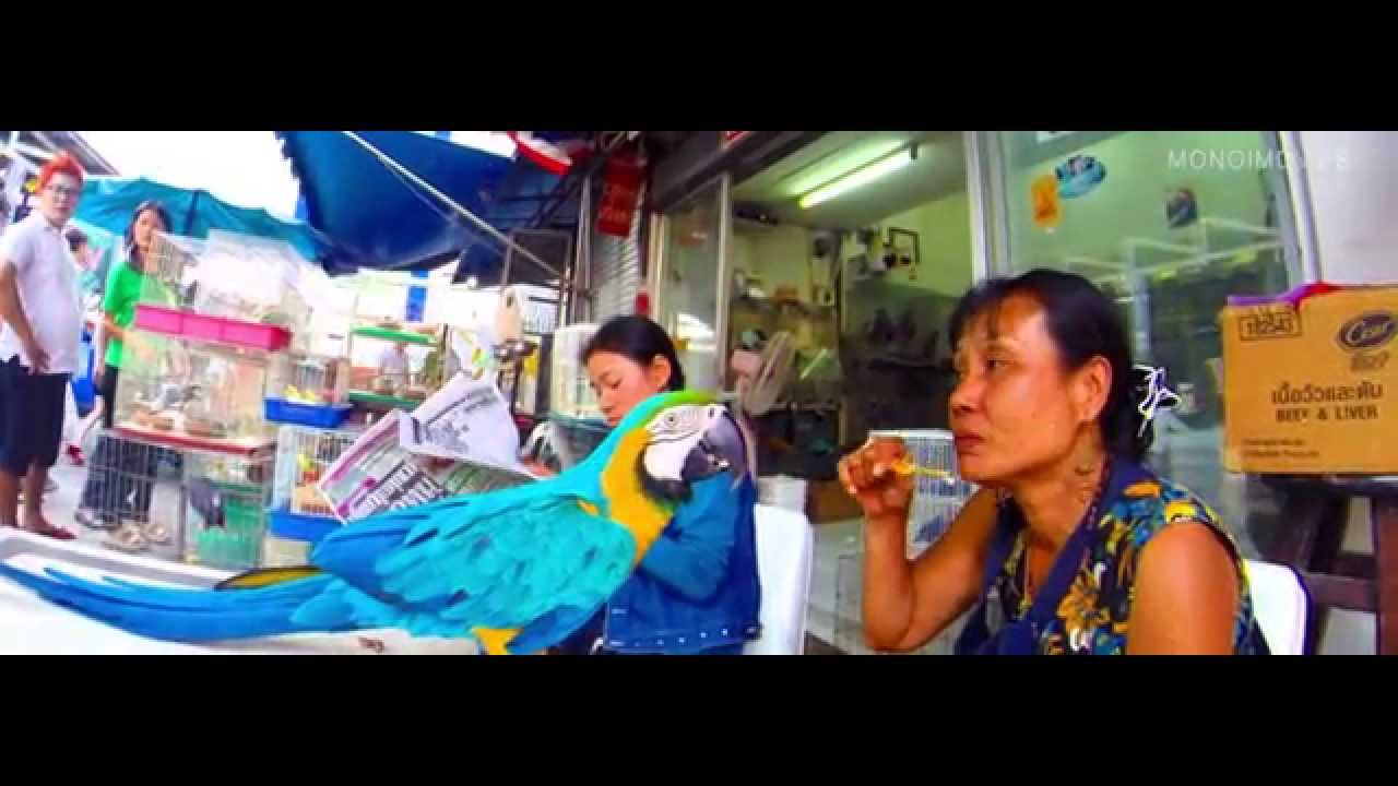 PARROT in BANGKOK