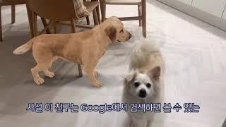 [줄복이 라이프] 구글 3D 동물 초대