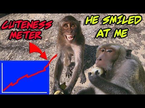I Fed Cute Wild Monkeys Bananas: MOST Of Them Were Thankful
