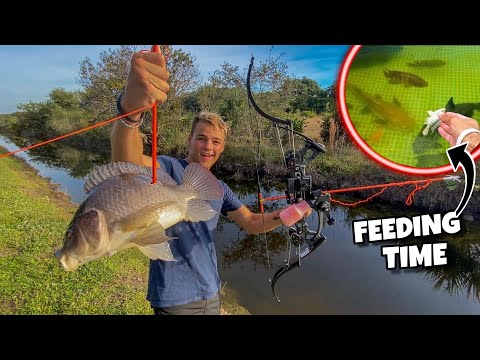 BOW FISHING INVASIVE FISH For FEEDING TIME!!