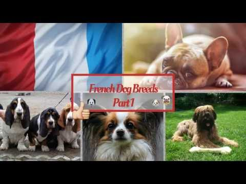 French Dog Breeds Part 1