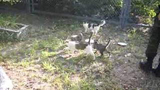 Чернобыльская зона отчуждения. Чернобыль и ЖД Янов(Поездка 21.08.2010 Использована музыка: Tool OST и CST различных Silent Hill Видео, фото и 3D за авторством меня, оф кос., 2010-09-05T14:27:37.000Z)
