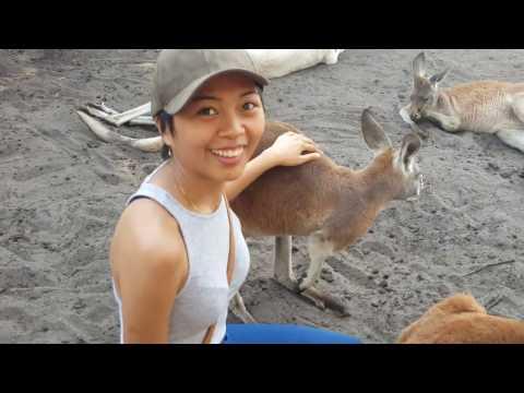 Caversham Wildlife Park, Perth Australia | Baby Kangaroo