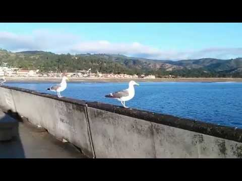 Crabzilla pacifica pier fishing report mostly bait fish for Pacifica pier fishing report