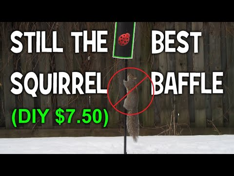 STOP SQUIRRELS From EATING Your BIRD SEED- Squirrel Baffle Update 2020