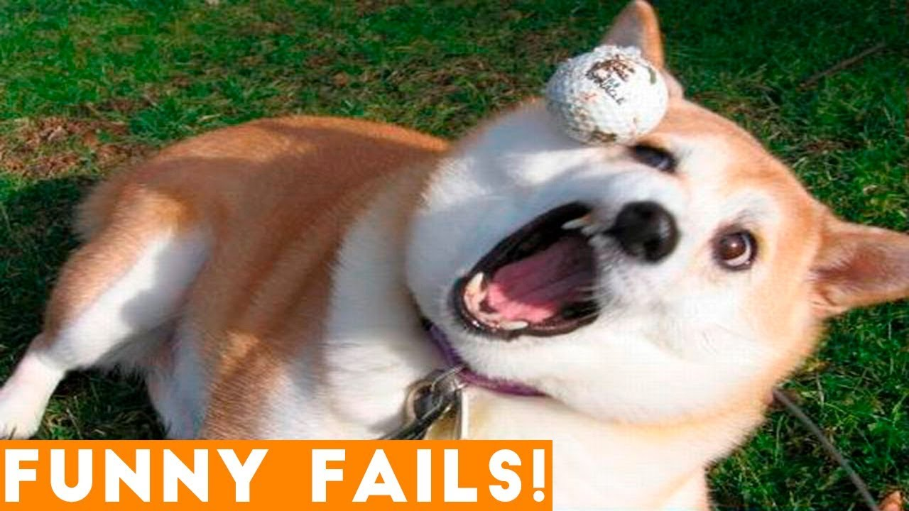 ULTIMATE FUNNIEST PET FAILS 2018 | Funny Pet Videos
