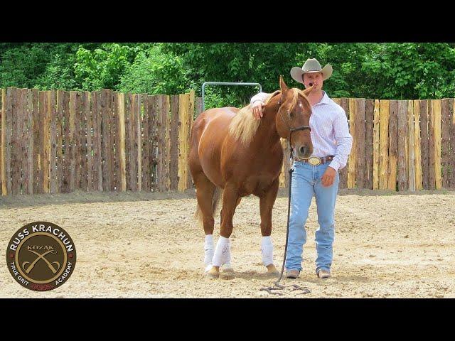 Discussion - Round Pen Methodology Lesson 21 - Russ Krachun Kozak Horsemanship