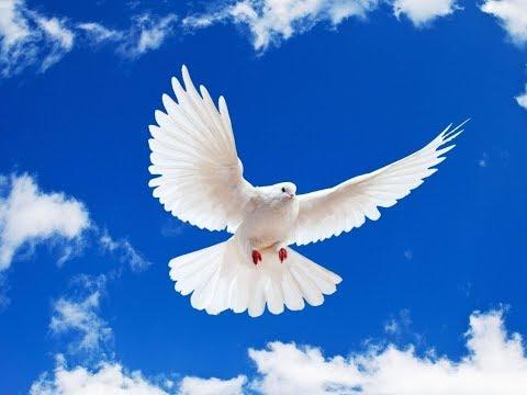 """Dove"" -  Peace Day Ontario"