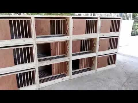 New Pigeons Wood Cages   Best working DIY   YouTube
