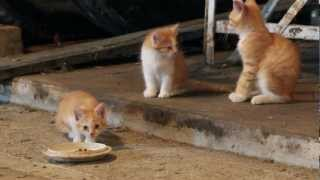 Cats Of The Barn