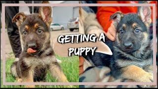 NEW PUPPY! BRINGING HOME OUR NEW GERMAN SHEPHERD PUPPY!!!