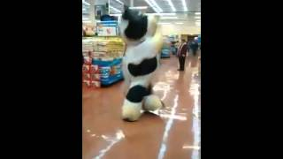 The supermarket cow dance