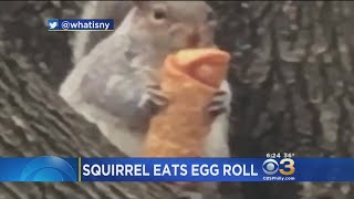 Squirrel Caught Eating Egg Roll In New York City
