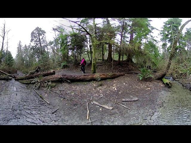 Virtual Puget Sound: Urban Watershed