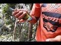 Pikat Burung Takur Di Hutan Menggunakan Suara   Ampuh