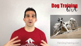 How To Deal With Dog Chewing