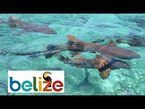 Snorkeling / Freediving in Belize 2017