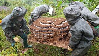 #Việt ong de#0986580389 việt nam cũng không thua kém gì trung quốc nuôi ong trong  hòm gỗ