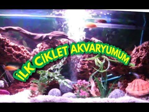 Cichlid Akvaryumu, Akvaryum Balıkları, Cichlid Aquarium