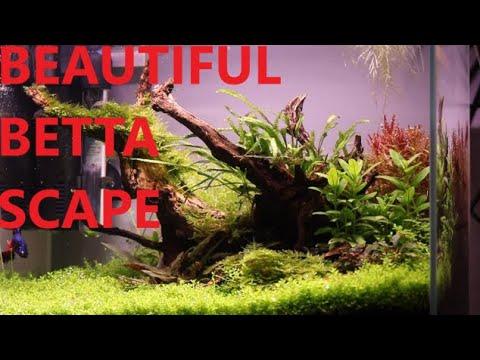 BETTA FISH TANK AQUASCAPE - YouTube