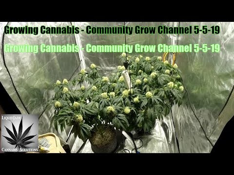 Growing Cannabis - Community Grow Channel 5-5-19
