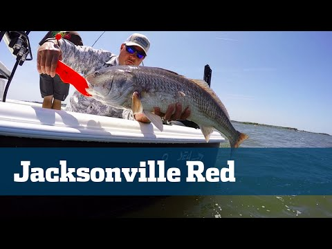Bull Redfish Jacksonville Mayport Inlet - Florida Sport Fishing TV