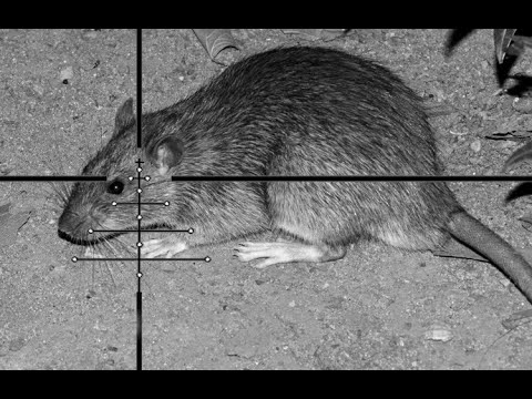 RAT SHOOTING DIY NIGHT VISION SCOPE CAM - YouTube
